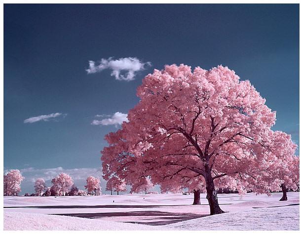 lumea-vazuta-in-culori-roz-17_c2caff51c692f3